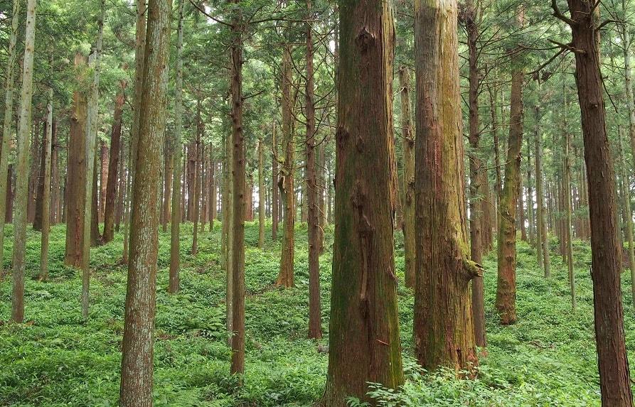 業種別制作方針・第二回【製造業 木材・木製品製造業】
